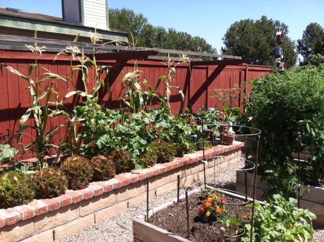 Sieger Garden (corn)