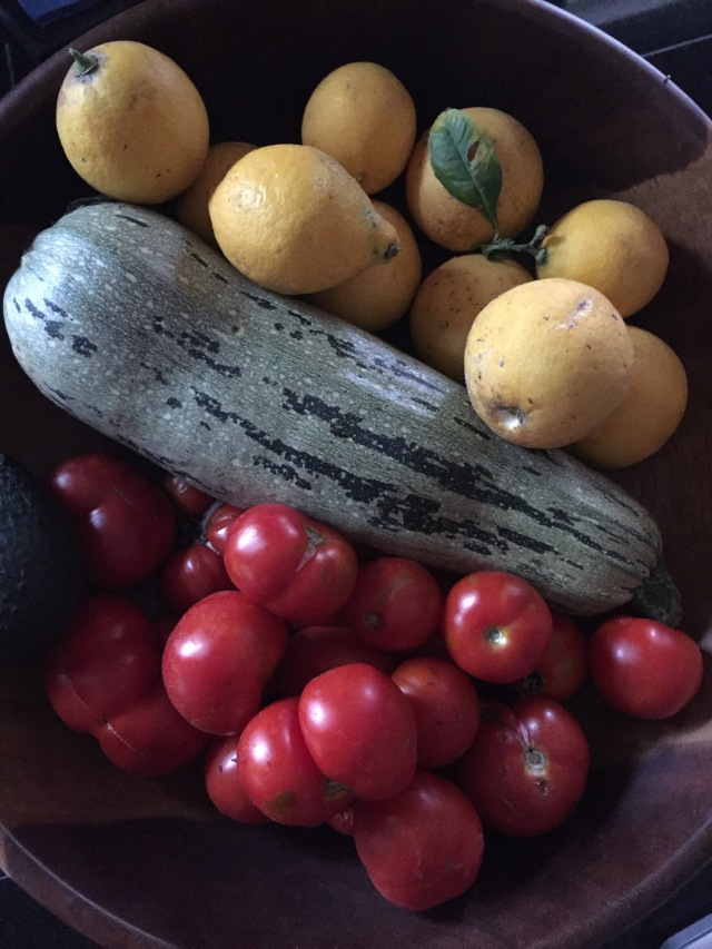 A small harvest of veggies